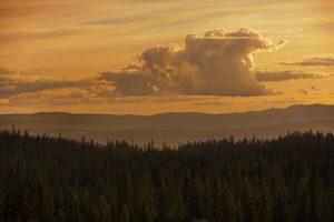 himmel og skog