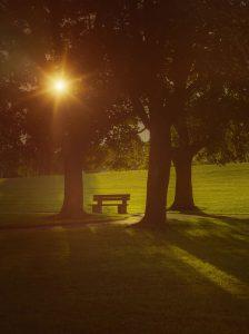 trær og benk i park