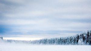 Skog med snø
